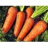 Продам морковь,  лук,  чеснок